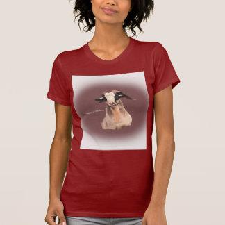 Seixos, a cabra em t-shirt atraente!