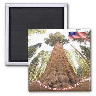 Sequóia do parque nacional dos E.U. EUA - general Ímã Quadrado