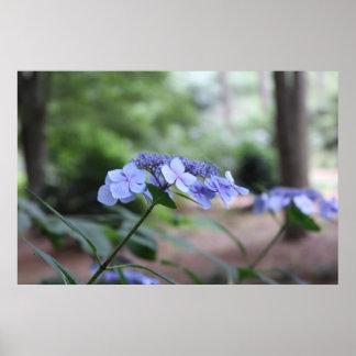 Série botânica 135 impressão