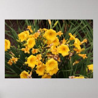 Série botânica 38 posters
