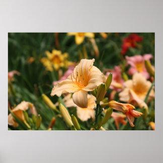 Série botânica 61 pôsteres