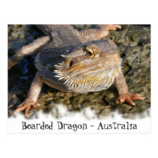 Série farpada do dragão cartão postal