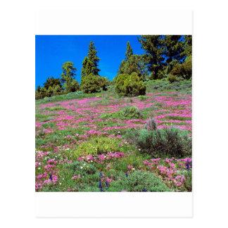 Serra montes Califórnia da primavera da cena Cartão Postal