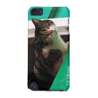 Seu gato bonito do gatinho da foto do animal de es
