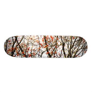Shape De Skate 18,1cm Frutas de Rowan ou bagas vermelhas da cinza