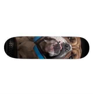 Shape De Skate 18,4cm buldogue DJ - o DJ persegue