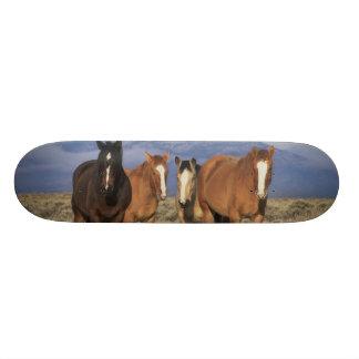 Shape De Skate 18,4cm EUA, Wyoming, perto do grupo de Cody de cavalos,