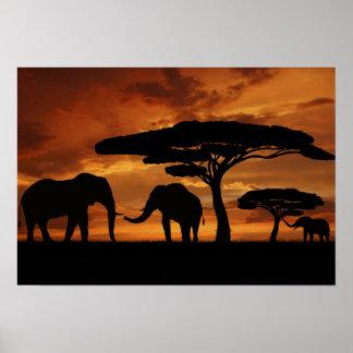 Silhuetas dos elefantes africanos no por do sol pôster