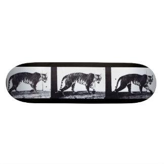 Skate do MOVIMENTO do LOUCO: Passeio do Tigress