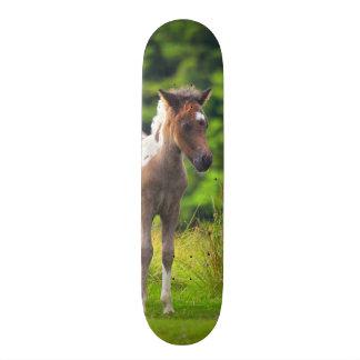 Skate estando do potro do pônei de Dartmoor
