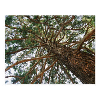 Sob a árvore cartao postal