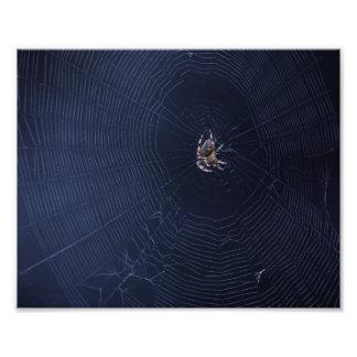 Spider world wide web impressão de foto