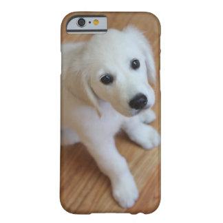 sua foto favorita do animal de estimação em um capa barely there para iPhone 6