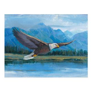 Subir da águia americana cartão postal
