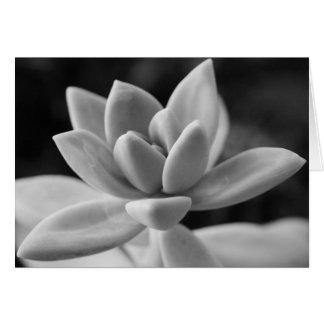 Succulent lindo da planta do fantasma cartão