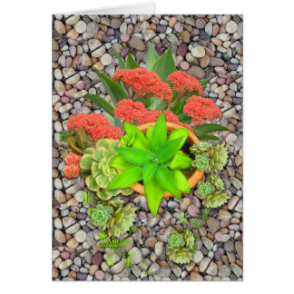 Succulents em seixos do jardim cartão
