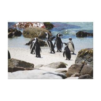 Sul - pinguins africanos