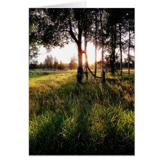 Sun através das árvores cartão de nota
