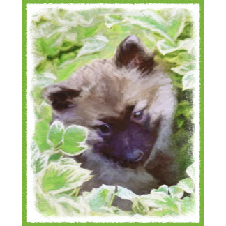 Keeshond Puppy (Brutus)