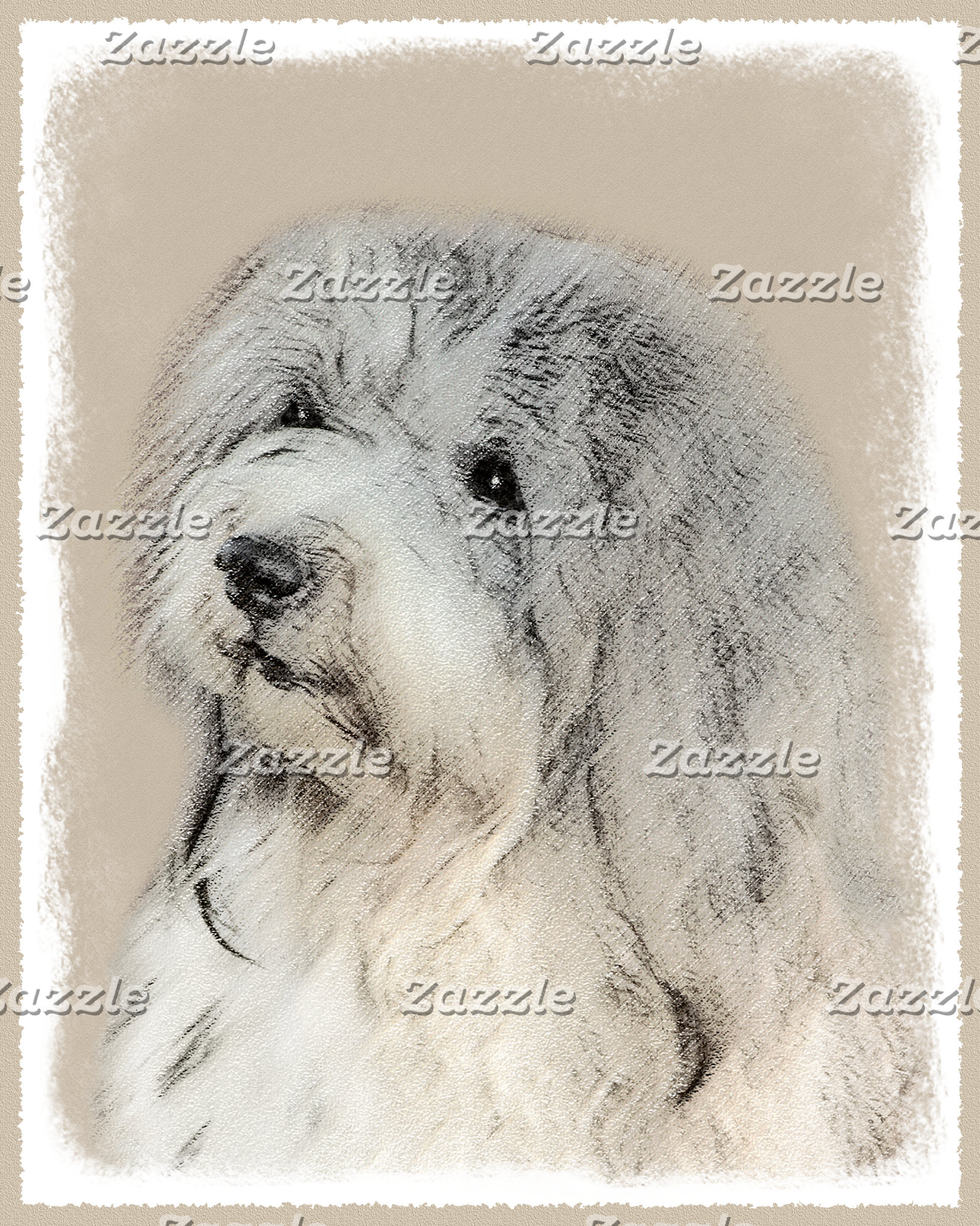 Havanese (Gold Sable)