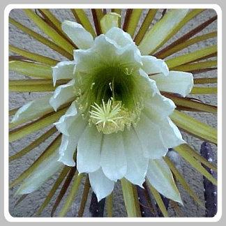 Flora / Pflanzen