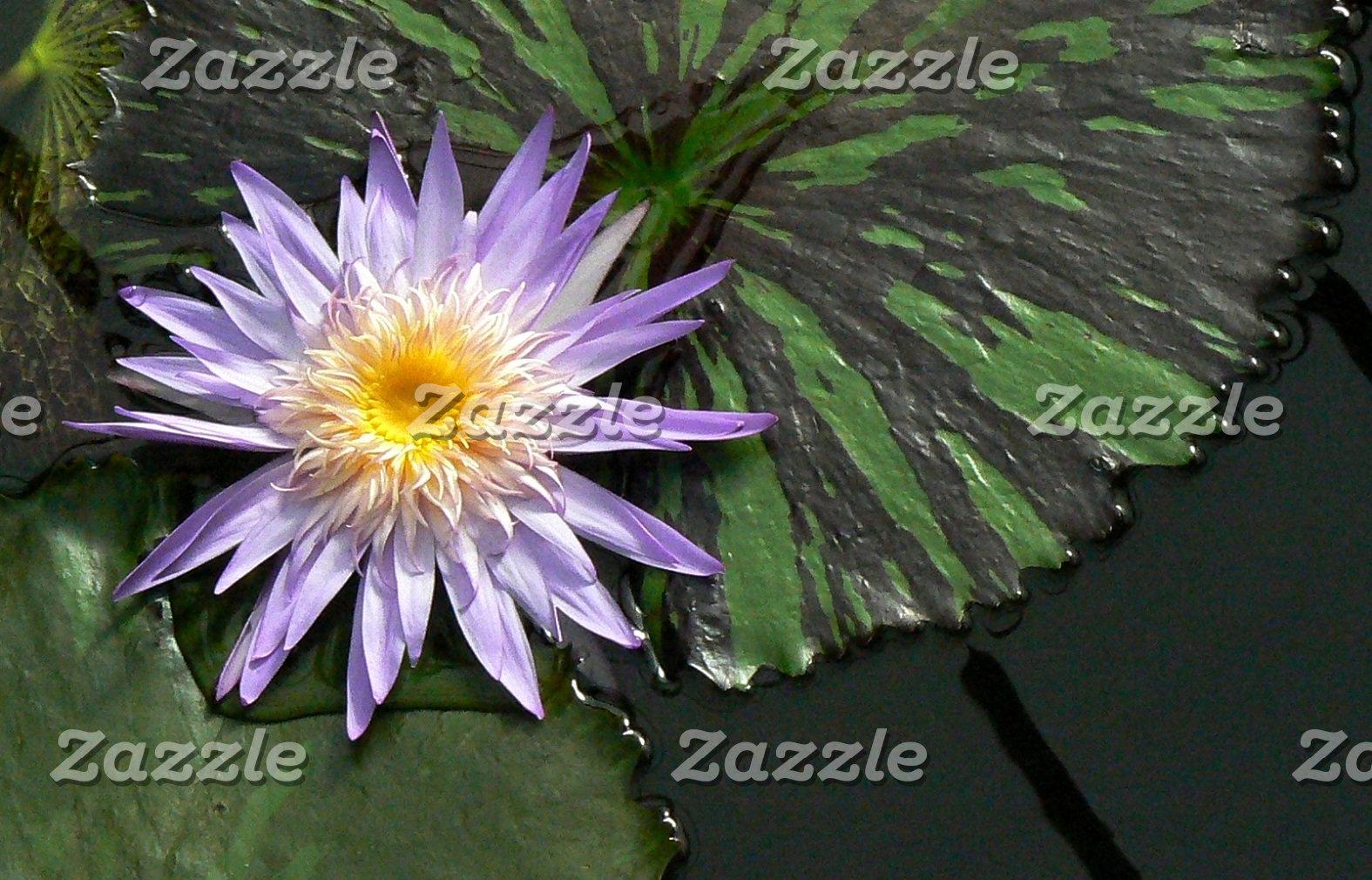 Flowers - Photos