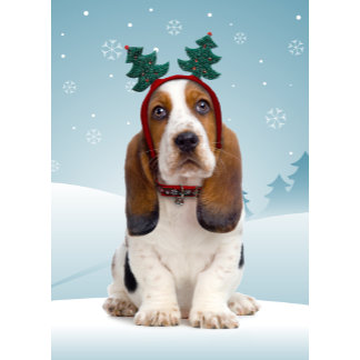 Basset Hound Christmas Cards and Gifts