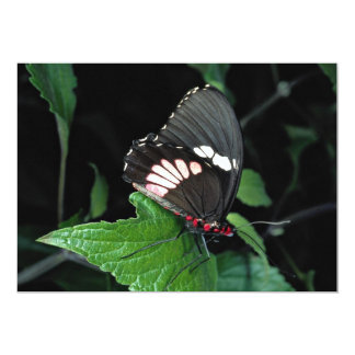 Swallowtail, central e Ámérica do Sul de Convite 12.7 X 17.78cm