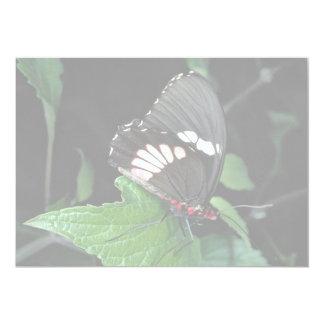 Swallowtail, central e Ámérica do Sul de Convite