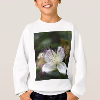 T-shirt Flor do arbusto da alcaparra, Capparis spinos.