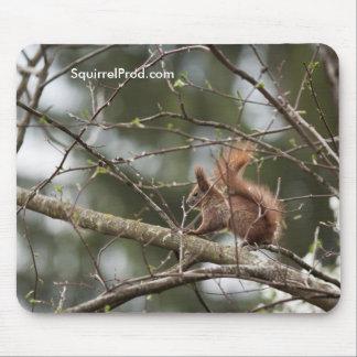Tapete do rato com esquilo mouse pad