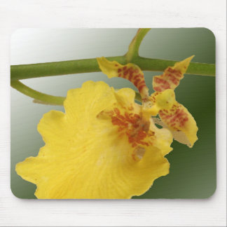 Tapete do rato da orquídea mouse pad