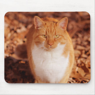Tapete do rato do gato de gato malhado do gengibre mouse pad