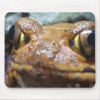 Tapete do rato engraçado do sapo de Brown Mouse Pad