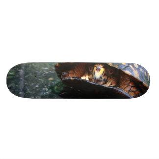 Tartaruga de caixa skate