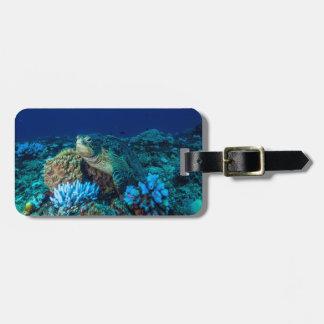 Tartaruga de mar no grande recife de coral tags de mala