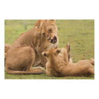 Tela De Madeira A leoa Snarls em Cub