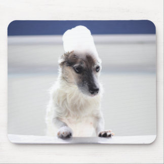 Tempo Mousepad do banho de Jack Russell Terrier