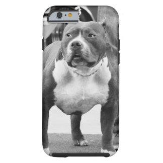 Terrier de Staffordshire americano Capa Para iPhone 6 Tough