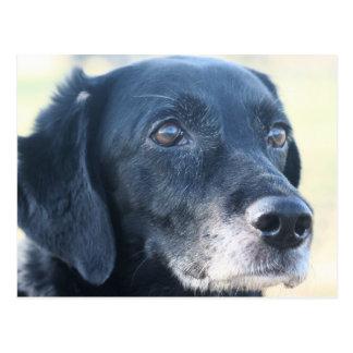 TESS - Labrador preto Photo-3 Cartão Postal