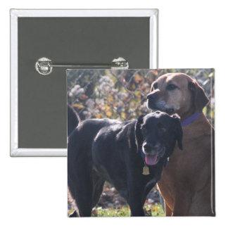 TESS - Labrador - Priscilla Photo-2 Pins