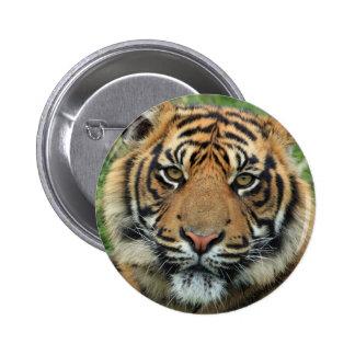 Tigre Bóton Redondo 5.08cm