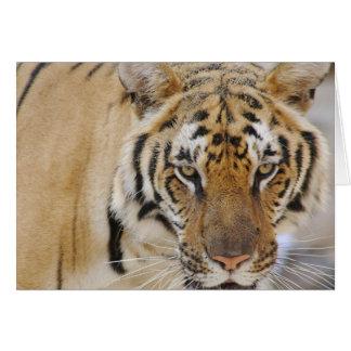 Tigre Cartão Comemorativo