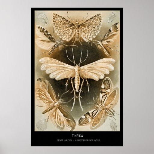 Tineida - placa 58 - der Natur de Kunstformen Poster