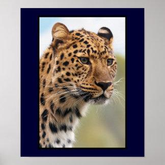 Tiro principal do leopardo impressão