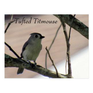Titmouse adornado - aprendendo o cartão - Florida