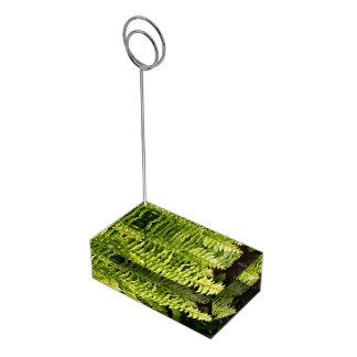 Titular do cartão da mesa - samambaia do tigre suportes para cartoes de mesas