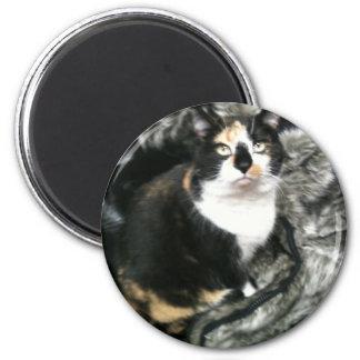 TORTIE O CAT DO ESCRITÓRIO ÍMÃ REDONDO 5.08CM