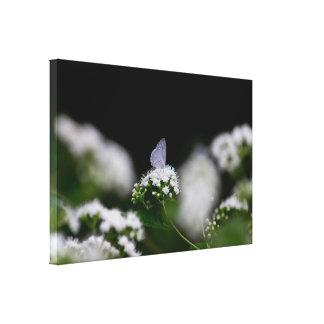 Traça branca delicada impressão em canvas