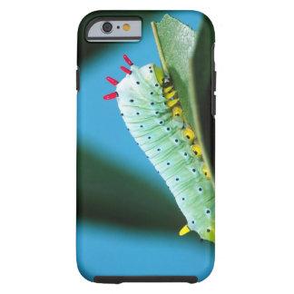 Traça Caterpillar do PROMETHEUS, Callosamia Capa Tough Para iPhone 6
